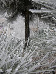 Winter 05 by Gwathiell