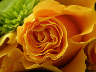 Yellow Beauty by Gwathiell