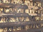 Spain W8 Wooden Ceiling