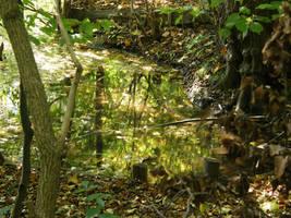 Autumn08 01 Forest reflection by Gwathiell