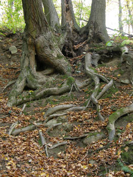 Autumn08 02 Lost in roots
