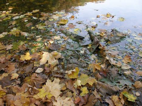 Autumn08 08 Wet leaves II