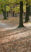 Autumn08 15 Parc by Gwathiell