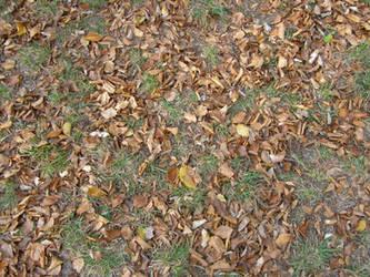 Autumn08 16 Leaves by Gwathiell