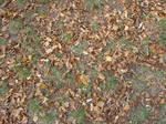 Autumn08 16 Leaves