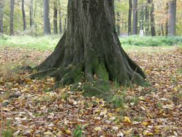 Autumn08 18 Trunk by Gwathiell