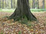 Autumn08 18 Trunk