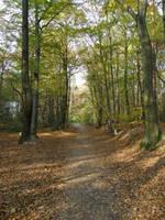 Autumn08 20 Path by Gwathiell
