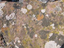 Spain Sa16 Moss texture I by Gwathiell