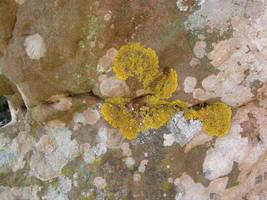Spain Sa17 Moss texture II by Gwathiell