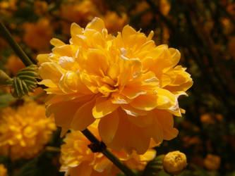 Arboretum - Yellow by Gwathiell