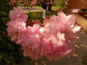 Arboretum - pink by Gwathiell