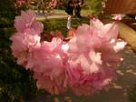 Arboretum - pink