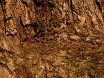Arboretum - Dead alive tree