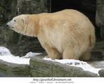 Zoo - Polar bear