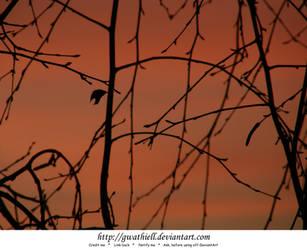Sunset leaf by Gwathiell