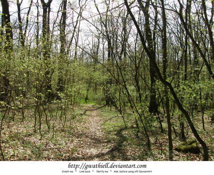 Velka Skala - The forest