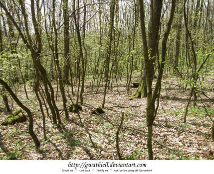Velka Skala - The lost forest