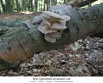 Mushrooms - Truffles