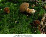 Mushrooms - Sunbathing