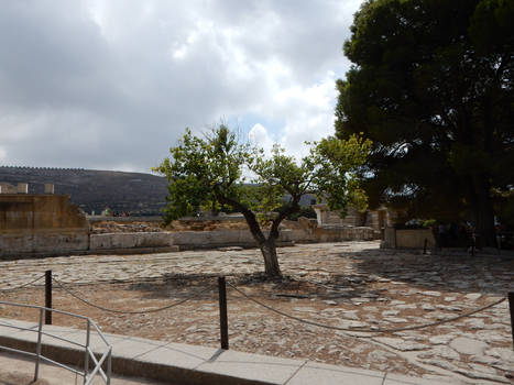Crete - Tree in Knosos