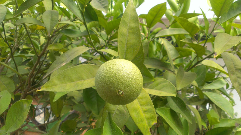 Crete - Lime by Gwathiell