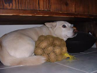 Miki the Dog - 05