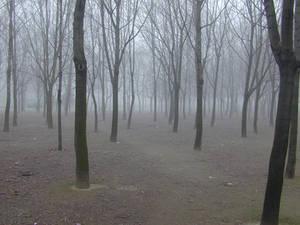 Fog - 01