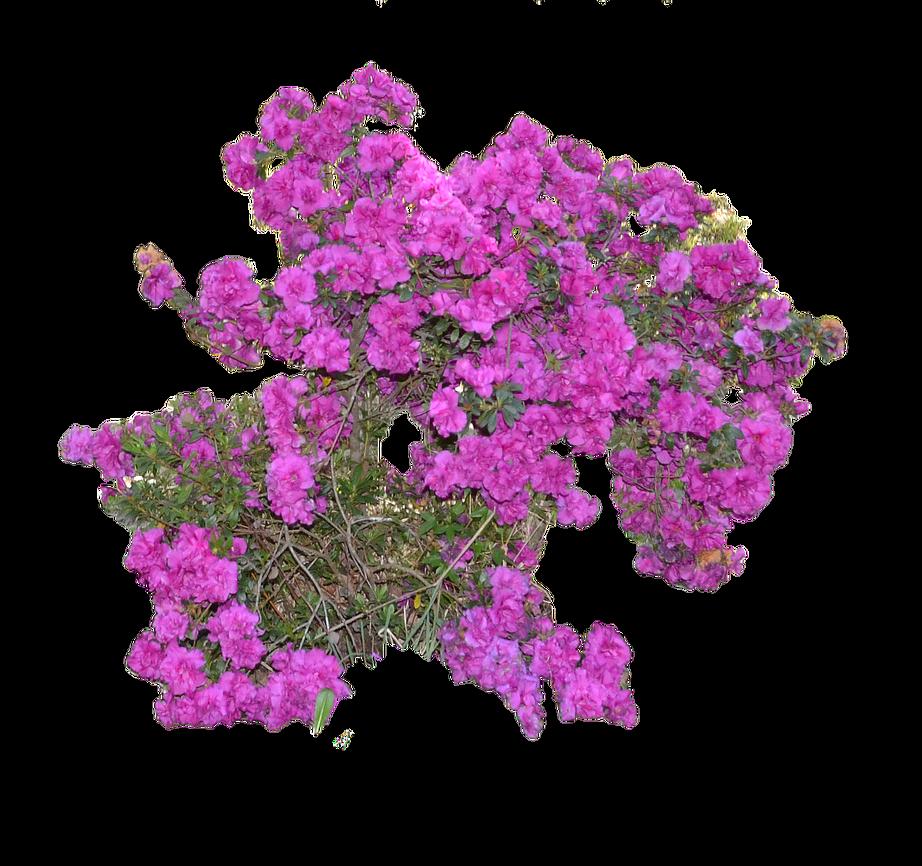 Flower 1 Png By Elsapret On Deviantart