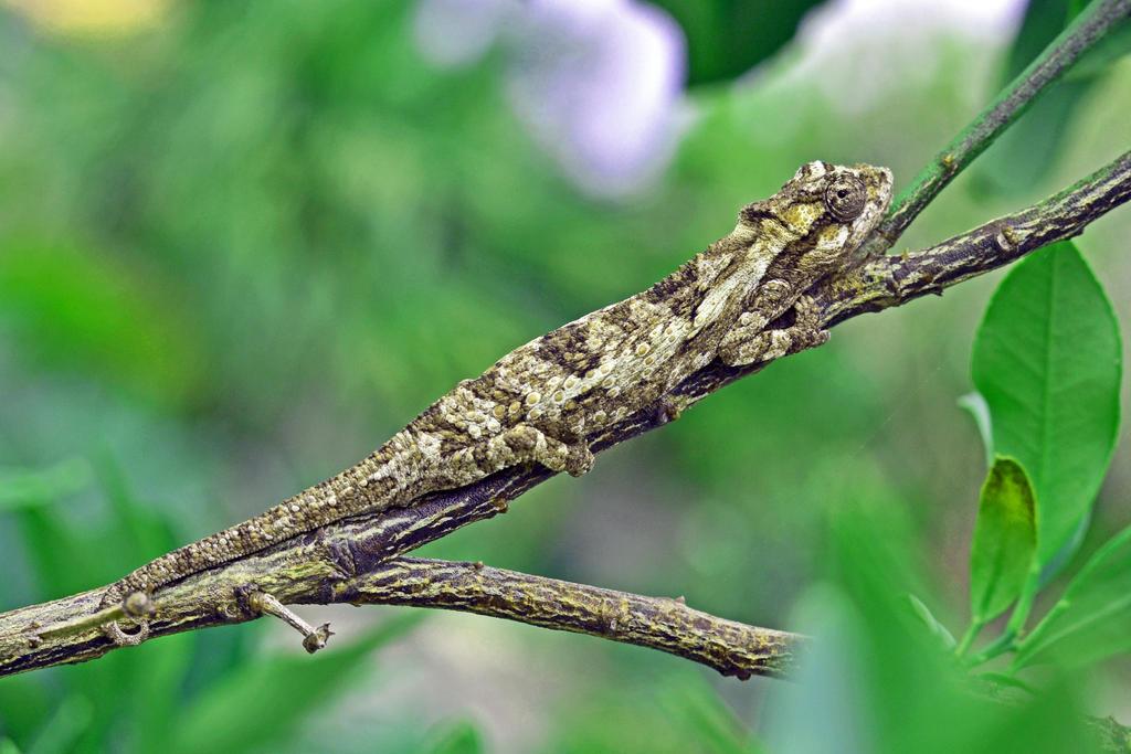 Camouflage by Elsapret