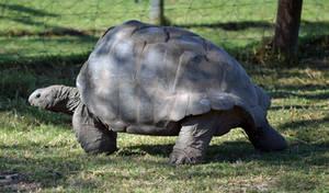 Tortoise stock 1 by Elsapret