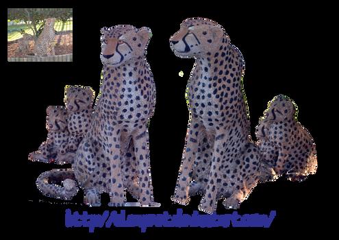Cheetah and babies