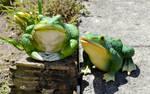 Garden frogs 1
