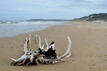 Cefane beach 4 by Elsapret