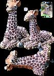 Baby giraffe combo PNG