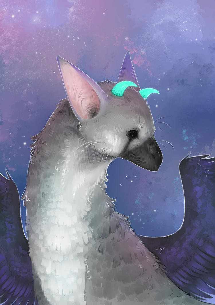 Trico by Zinderell