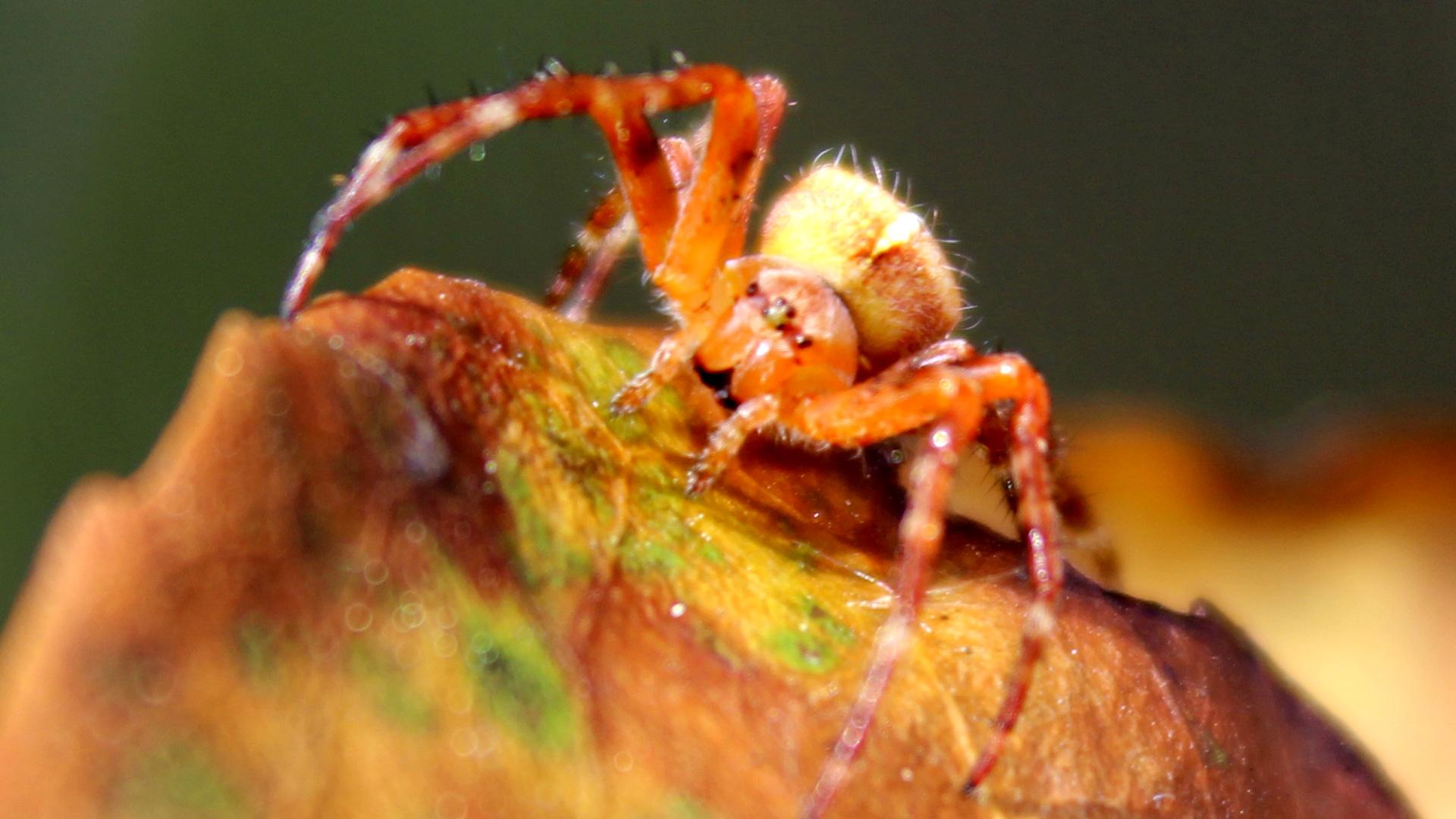 Spider by gorvenal