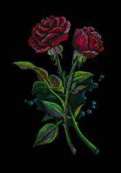 Roses by lifebytes