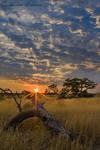 Stumped by a Kalahari sunrise