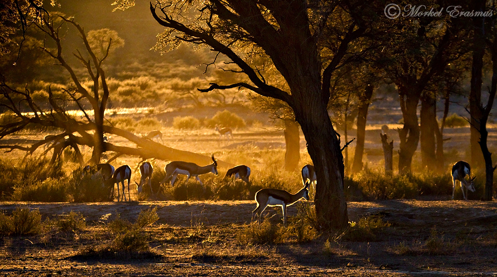 Kalahari Dawn by MorkelErasmus