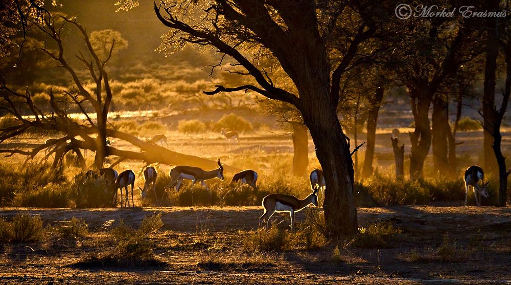 Kalahari Dawn by MorkelErasmus