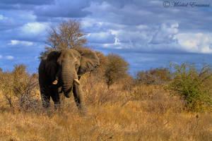 Elephantscape by MorkelErasmus