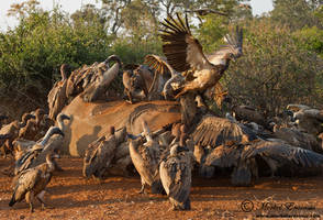 The Circle of Life by MorkelErasmus