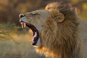 Big Yawn by MorkelErasmus