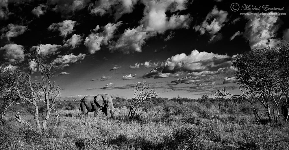 African Elephantscape by MorkelErasmus