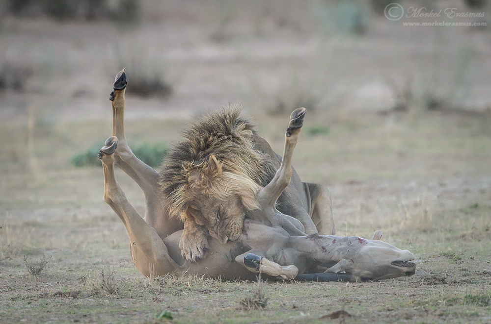 The Smothering by MorkelErasmus