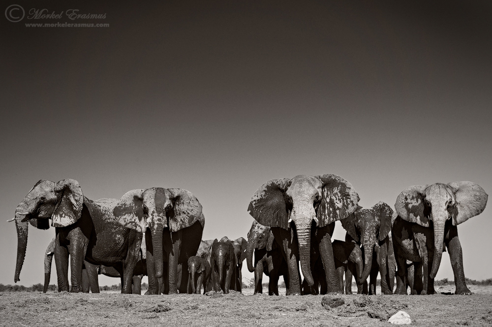 The Lineup by MorkelErasmus