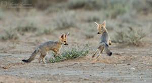Foxy Playtime by MorkelErasmus