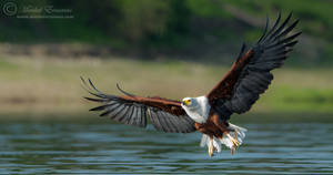 Graceful Flight by MorkelErasmus