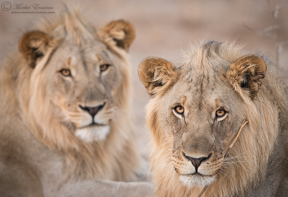 Two Young Kings by MorkelErasmus